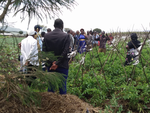 NIAP Stakeholder Consultation and Learning Visits in Naivasha - 25-27th Sept,19