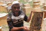 Bees make a big buzz in Uzbekistan