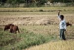 Bangladesh: Geodata for farmers (2015, blog)