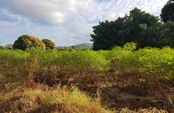 Making difficult choices about agricultural intensification in Malawi