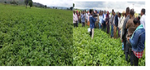 Higher Officials visit Haricot Bean and Teff Cluster Farming on Farmers' Field D