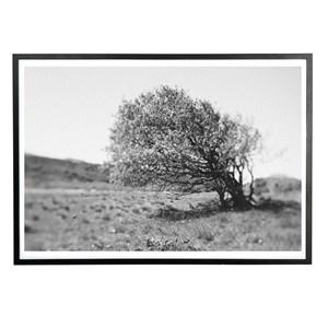 Applicata - Plakat - Windy tree - 30x40 cm