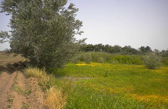 Paraje VEGA DE LA FLORIDA, POL.137 PARC.33 Y 101 0 , Jerez de la Frontera, Cádiz