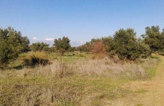 Venta de Terreno en Bonares, Huelva,Magnífica oportunidad,
