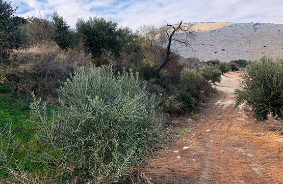 Paraje QUEBRADA S/N, POLIG 33, PARCELA 59 0 , Jaén, Jaén