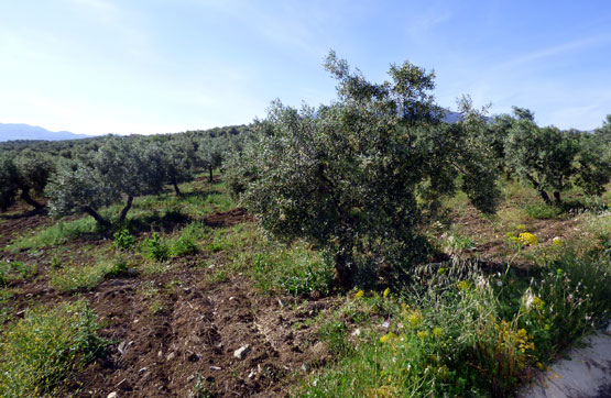 Plot, Land  for sale    en Alozaina