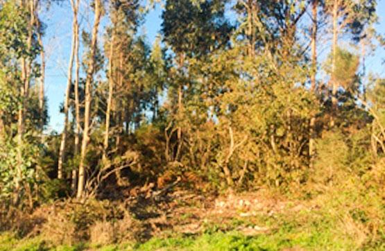 Polígono 504, PARC 5486, PARAJE SEDOFEITO 0 , Lousame, A Coruña