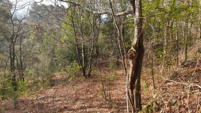 Paraje PARROQUIA CRECENTE, POL 5 PARC 118 0 , Crecente, Pontevedra