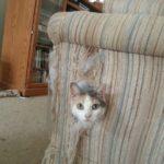 cat in sofa