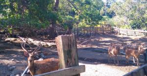 Tandurusa Zoological Garden