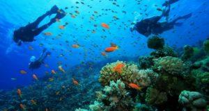 diving in komodo island