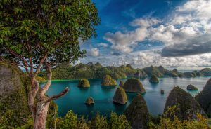 Forest in Raja Ampat