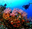 55 Sites Diving in Indonesia – Underwater – Biodiversity – Enchanted Seas