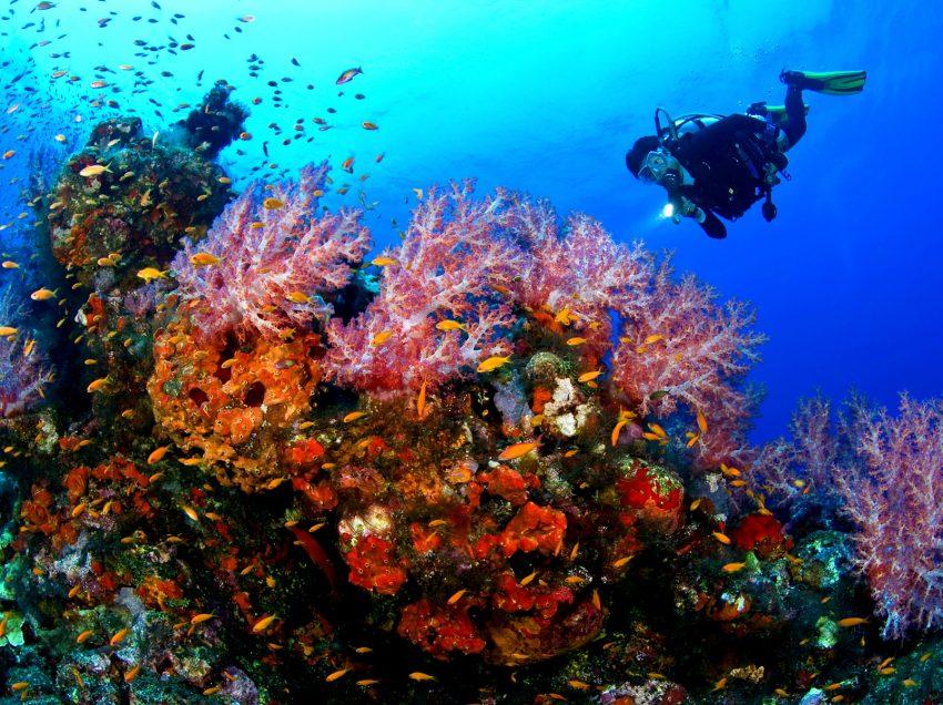 55 Sites Diving in Indonesia – Underwater – Biodiversity – Enchanted Seas