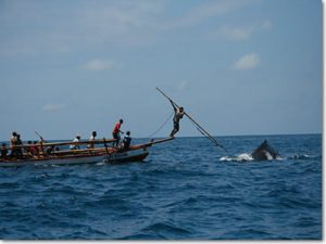 see the whales hunting