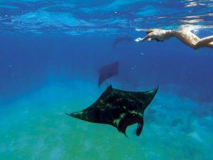 swim with shark in flores