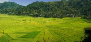 Tour the Spiderweb Rice Fields'