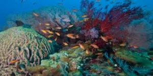 underwater photo amed