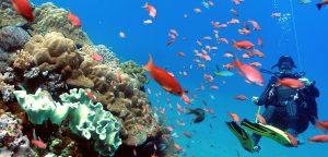 gili tepekong underwater