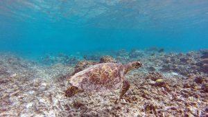 gili's turtle