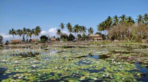 lotus lagoon candidasa 2