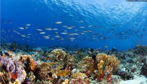 sumbawa-diving