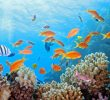 33 Spots in Bunaken Island Indonesia  – Diving – Biodiversity Attractions
