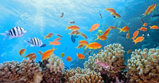 33 Spots in Bunaken Island Indonesia  – Diving – Biodiversity Attractions