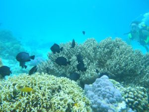 panjang reef