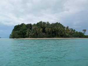 semut island
