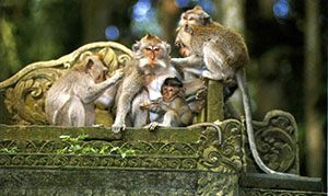 Monkey Forest Santuary