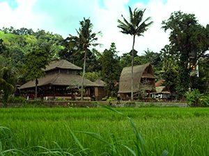 Sukahet Plantation