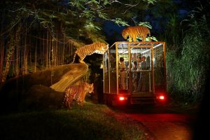 Bali Safari Night