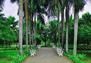 Cattelya Park 1