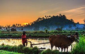 Bali-Sidemen