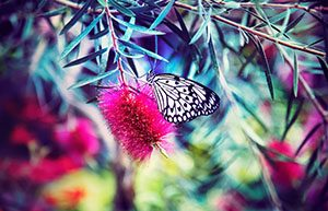 Bali Butterfly Garden