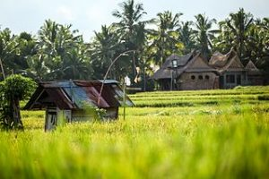 house_in_green_fields_of_Penestanan