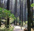 7 Natural Things to Do in Dago Bandung