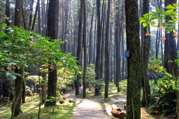 15 Beautiful Things to Do in Cikampek, West Java
