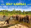 16 Wild Things to Do in Way Kambas National Park