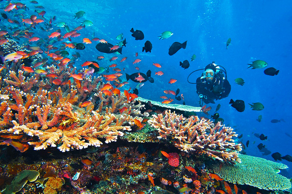 15 Best Spots for Scuba Diving in Indonesia #1 Heavenly