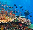 Bunaken Diving Review – The Best Diving Spot Ever!