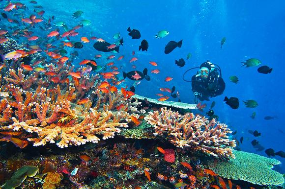 Bunaken Diving Review – The Best Diving Spot Ever!