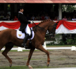Best Place to Do Horseback Riding Jakarta – Spots and Recommendation