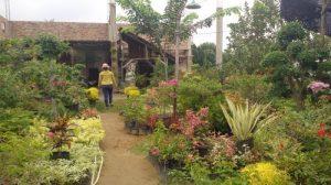 kampung wisata bunga