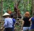 Amazing Things to Do in Tanjung Puting National Park Indonesia