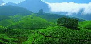 Kemuning tea plantation
