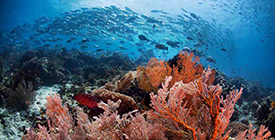 The Explanation Why Raja Ampat Is Famous
