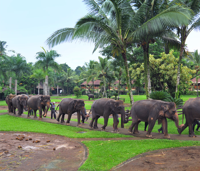 Review of Elephant Safari Park Lodge Bali – Itinerary – Accommodation