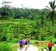 Tegalalang Rice terrace in Ubud Bali Indonesia – The Ultimate Guide for Tourist